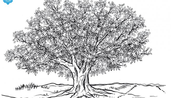 Árvore Paineira